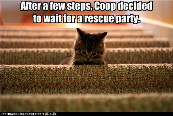 cat gets stuck when there are too many steps - don't let this be your customers!