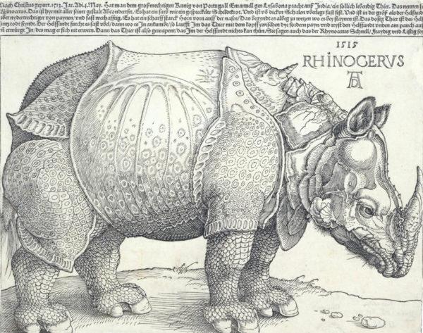 Durer's 16th Century Rhino